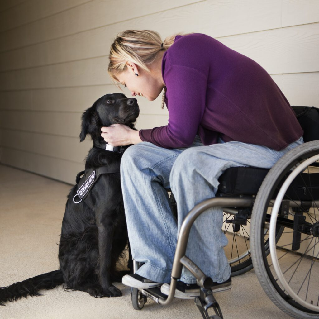 A mature woman wheelchair user stroking her black labrador service dog and making eye contact with